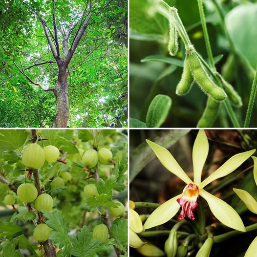 Question of the Day | Where Does Vanilla Come From?