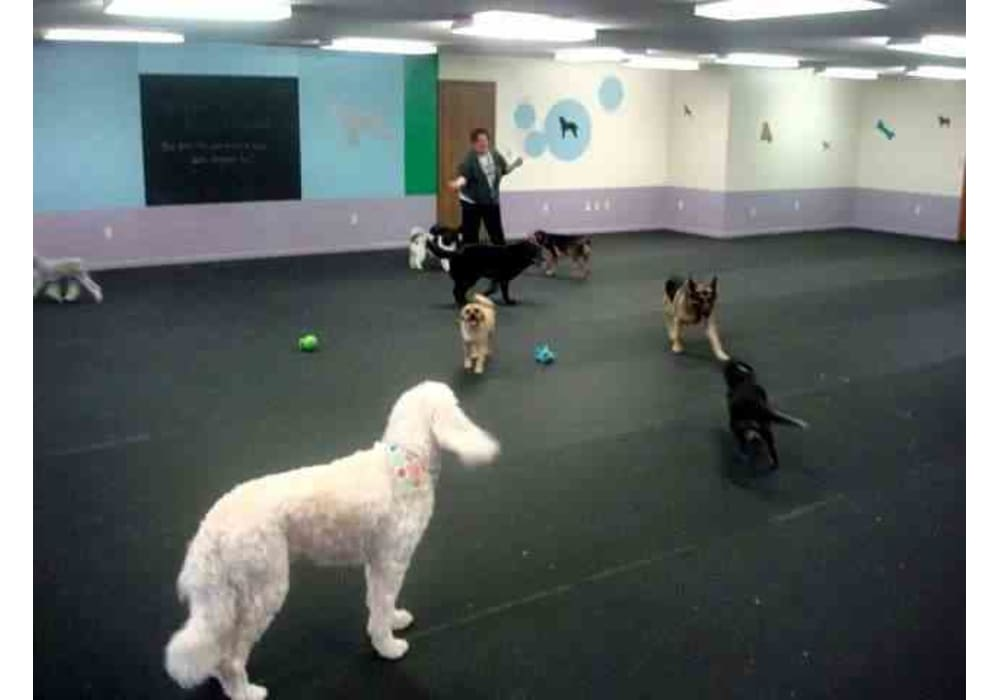 Rubber Flooring For Doggy Daycare, Indoor Dog Run Flooring