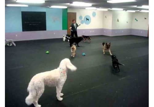 Dog Boarding Daycare Floor