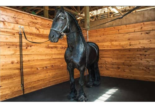 Rubber Mats For Horse Stalls And Livestock Trailers
