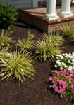 Gardening Mulch