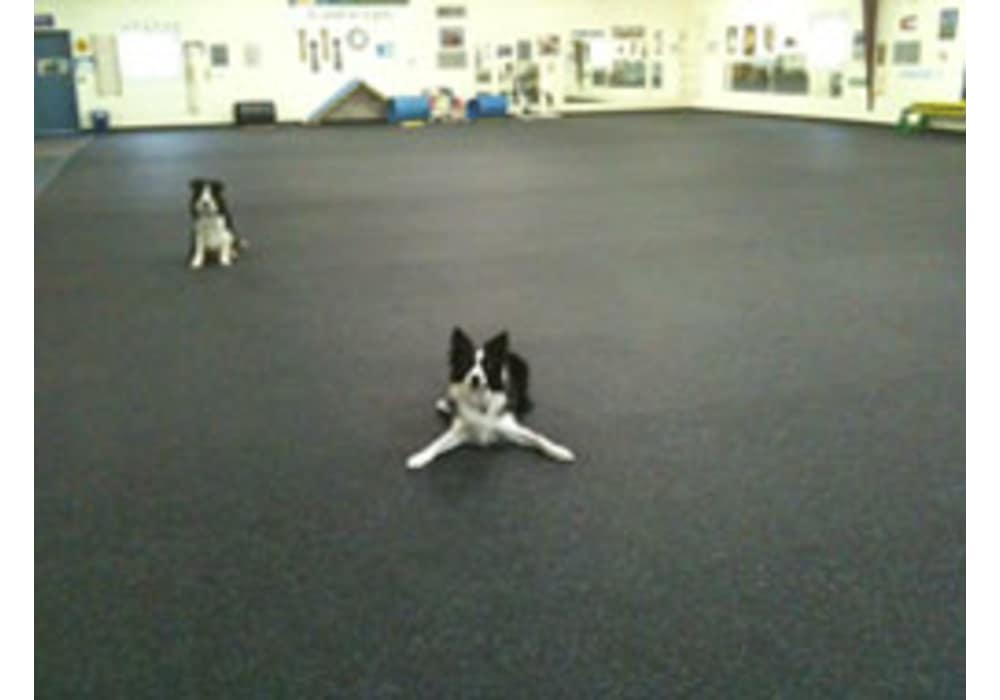 Rubber Flooring For Doggy Daycare Boarding Kennels And