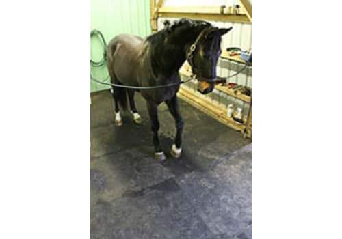 Horse Stall & Livestock Trailer Mats