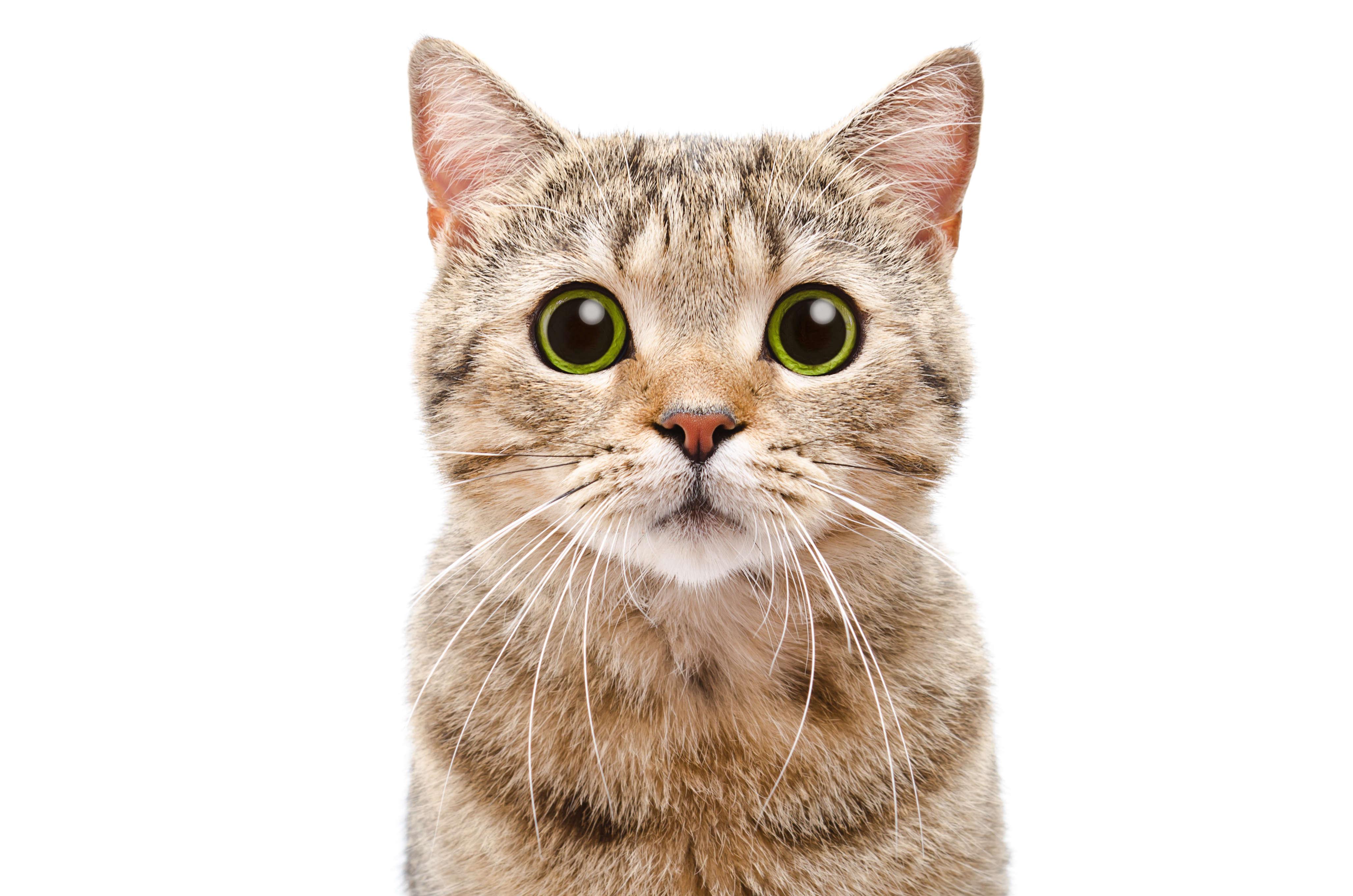 An avatar of a cat