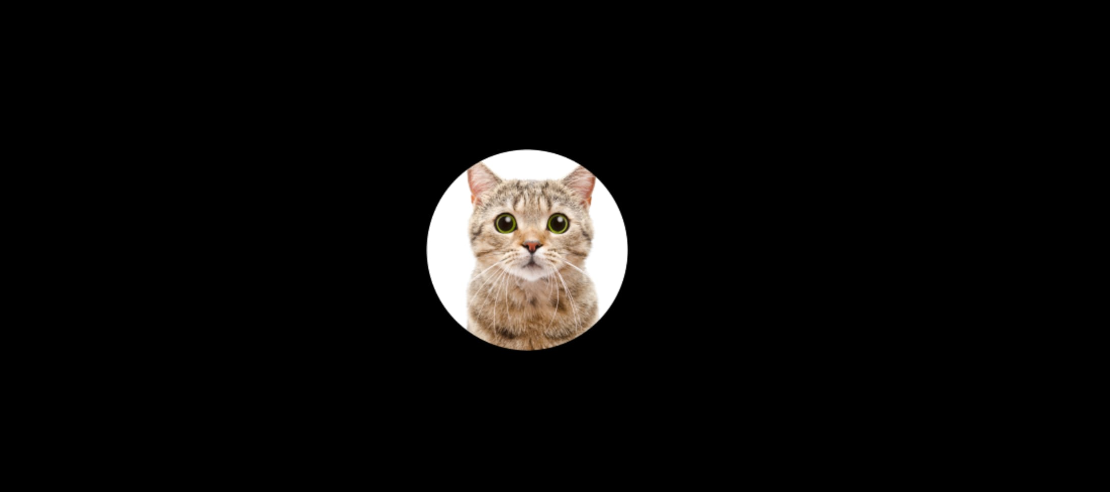 The cat avatar in round shape and 100x100px
