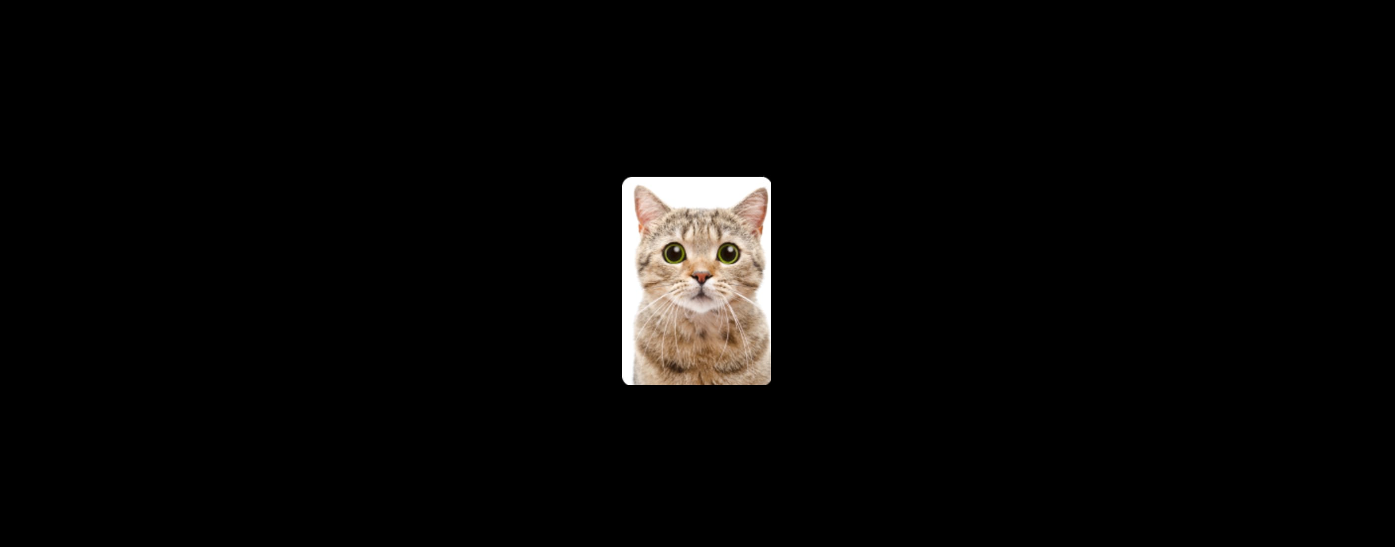 The rectange cat avatar generated by Cloudinary