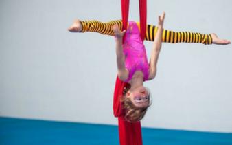 Circus or Ninja?