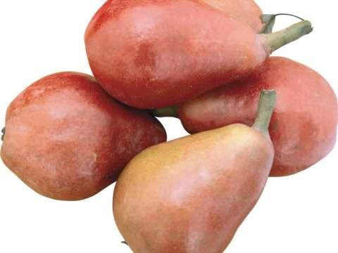 Ζελέ με αχλάδια-τζίντζερ-βερίκοκα