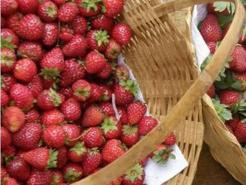 Μαρμελάδα φράουλας με ολόκληρες φράουλες!