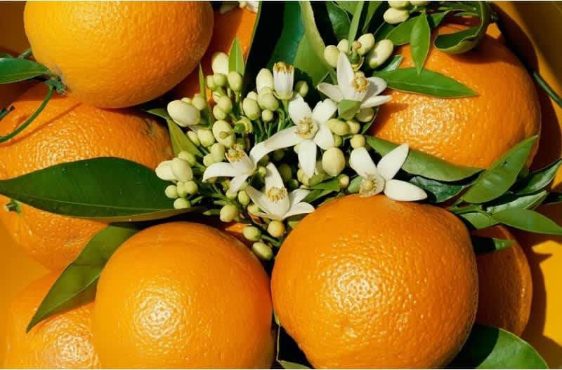 Συνταγή Κέικ πορτοκαλιού