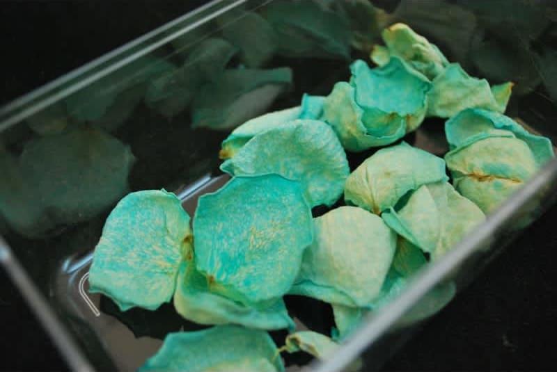 Συνταγή Κρυσταλλωμένα άνθη για διακόσμηση