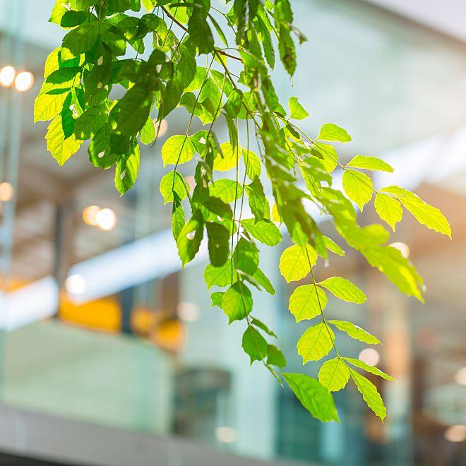 Foliage_bPakxr7G