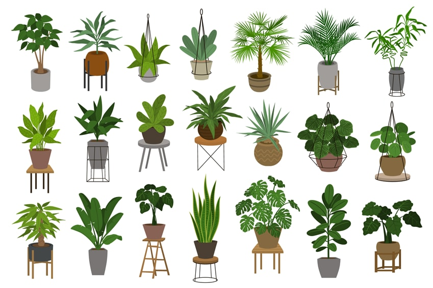 These Five House Plants Make Great Companions