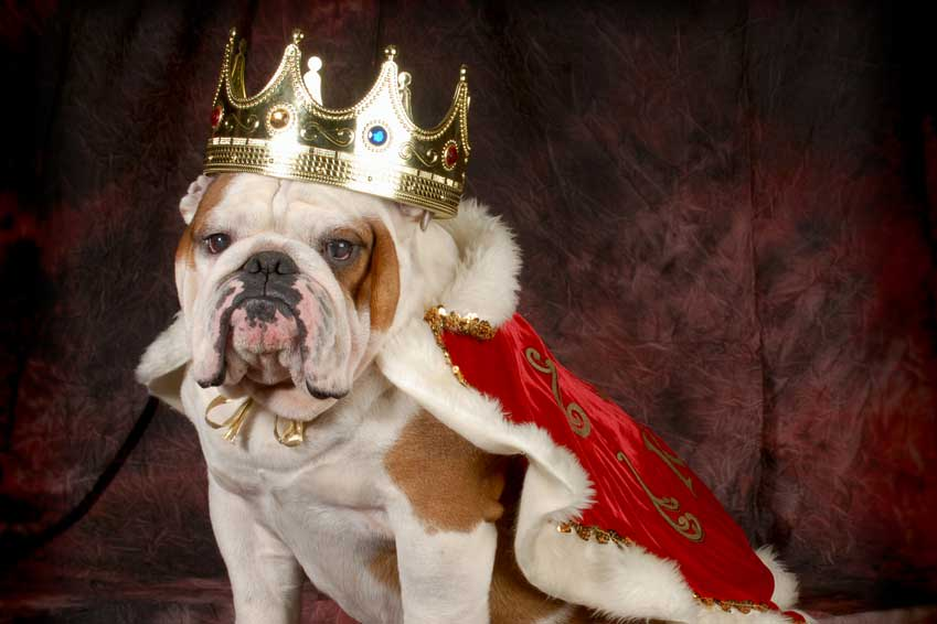 Don't Turn Your Dental Crown Into A Dog – Here's How…