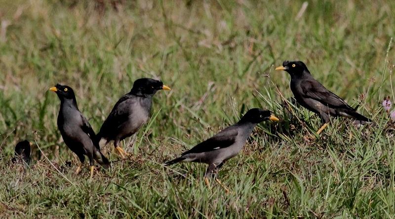 birds in singapore zoo