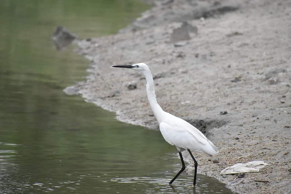 Beautiful and Endangered Species of Birds in India
