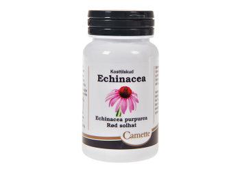 Camette Echinacea