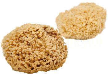 Cocoon Organic Laundry Natursvamp Honey Wool 13-14 Cm