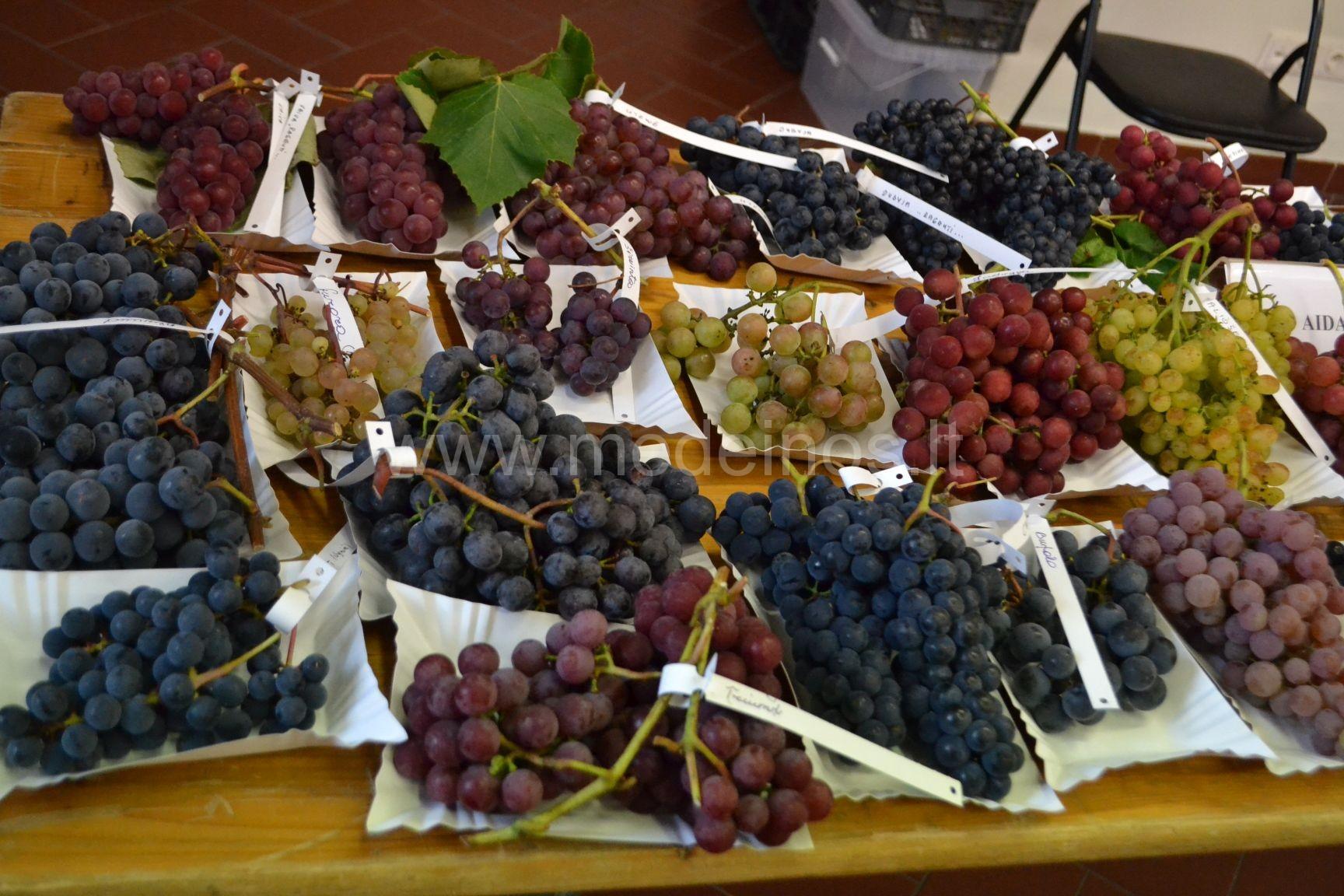 Kurių vaisių sėklas patartina valgyti, o kurias geriau išspjauti?