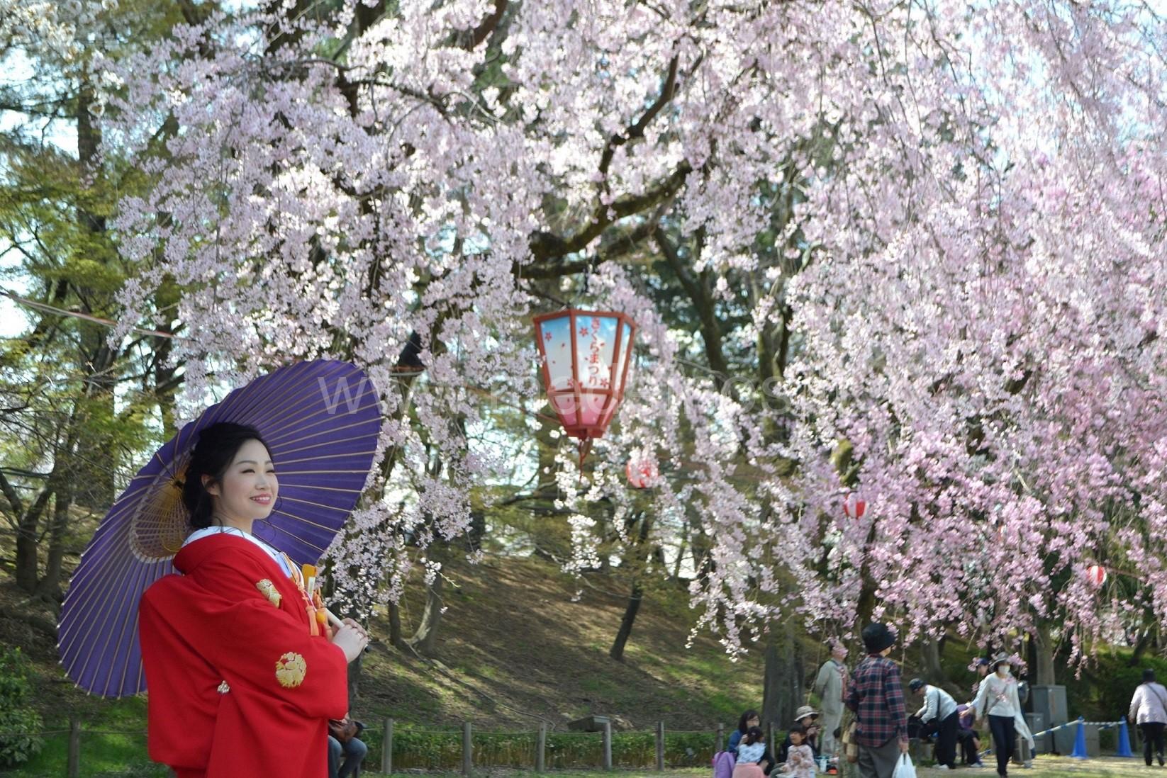 Sakuros Japonijoje – būti čia ir dabar
