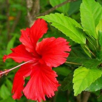 Buy Medicinal Plants Online At Medicinal Live Largest Medicinal