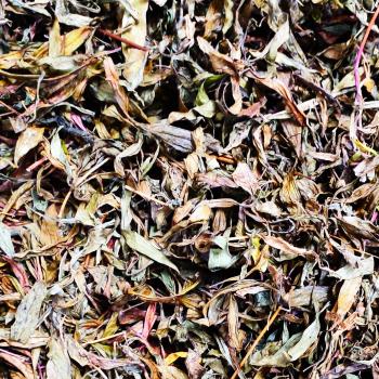 Buy-medicinal-plant-buy-online-herbal-plants-live-plants-ayapana-powder-அய்யம்பனை-பொடி-காய்ந்த-இலை