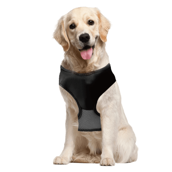 2-for-Tuesday: 2-in-1 Lucky Leash Retractable Dog Harnesses/Leashes