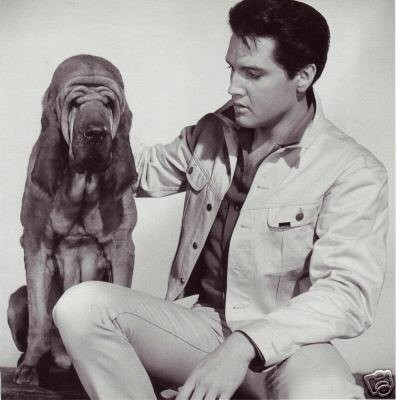 Elvis Presley & Bloodhound - Photo - 1964