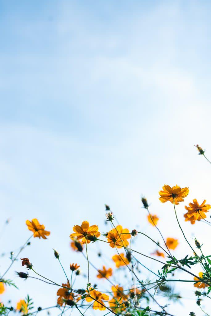 Faire face à la déprime hivernale et préparer le printemps avec la sophrologie
