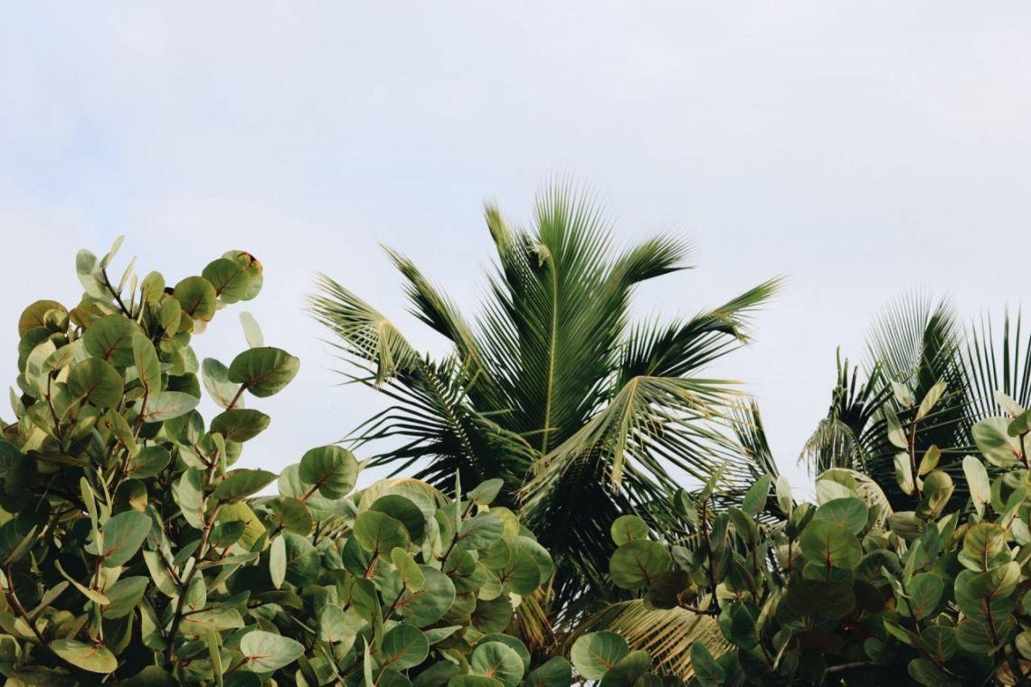 Equilibre émotionnel : le secret des plantes
