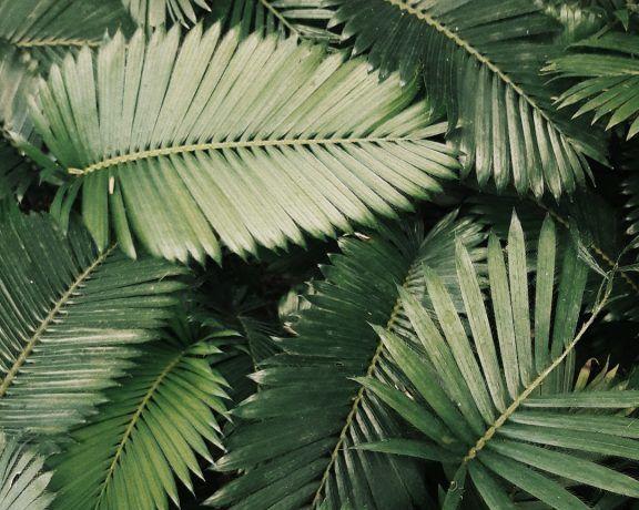 5 plantes pour mieux digérer