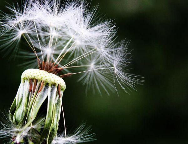 Traiter les allergies avec l'hypnose