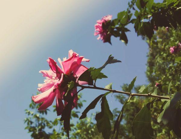 Les Fleurs de Bach : Pour avoir plus confiance en soi