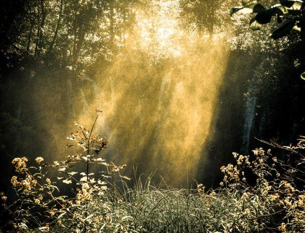 Déprime hivernale ? Faites grandir votre soleil intérieur !