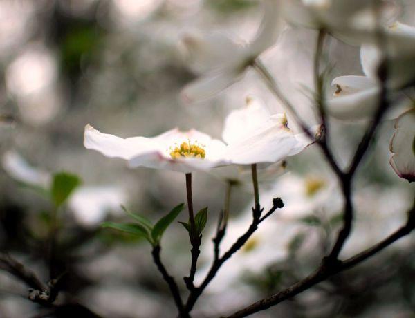 8 astuces ayurvédiques pour limiter vos allergies printanières