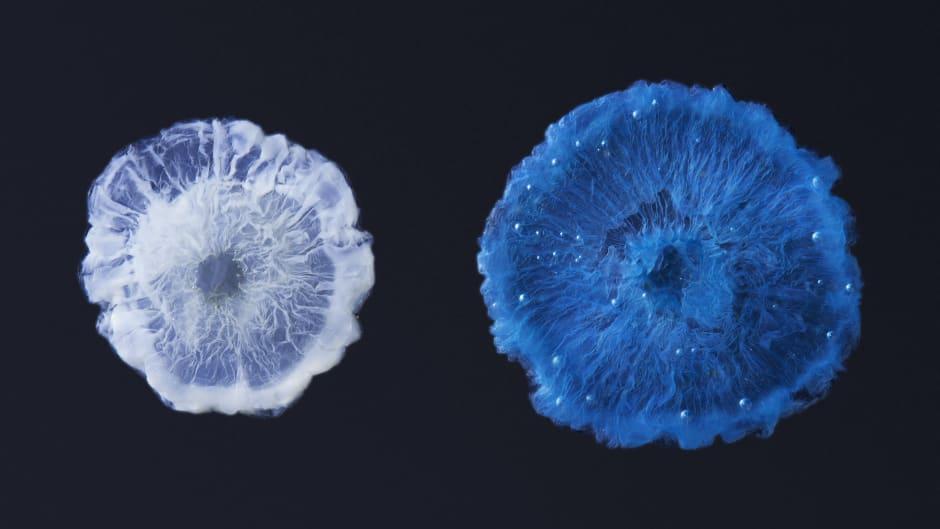Chemical jellyfish