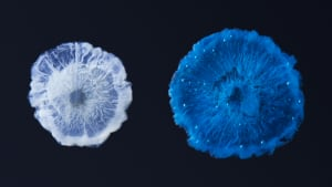 Chemical jellyfish