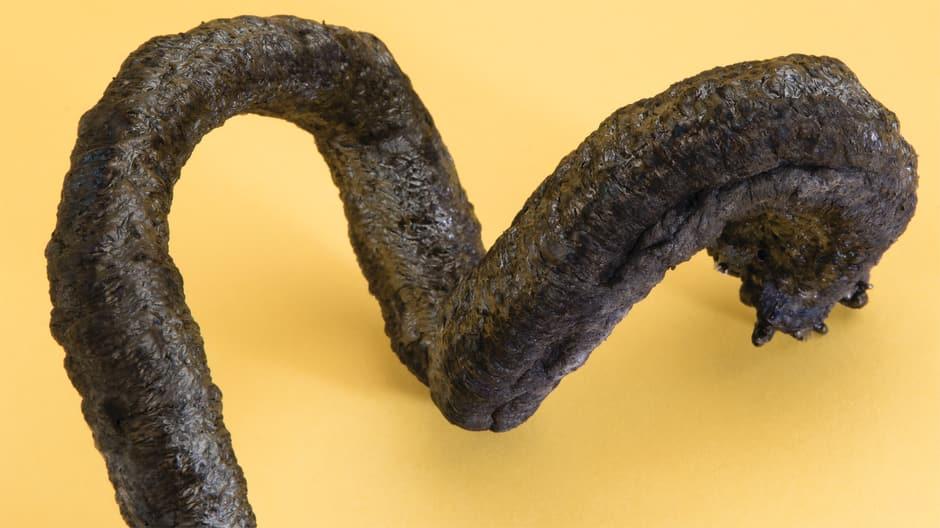 Carbon snake
