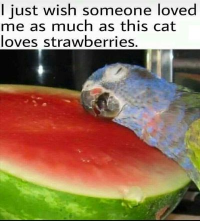 My special pet