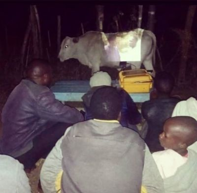 african imax on a cow