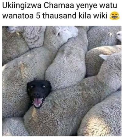 ukiingizwa chama yenye watu wanatoa 5 thousand a week