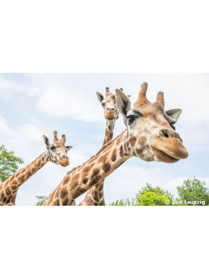 Zoo Leipzig inkl. 4* Hotel für die ganze Familie