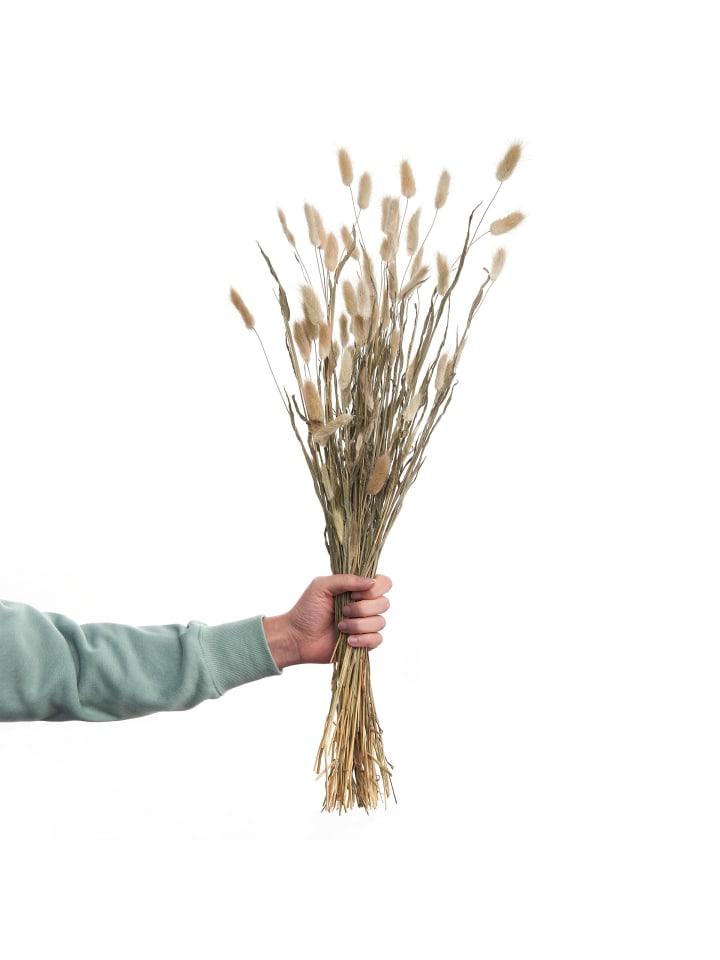 Butlers Trockenblumen Lagurusgras Länge 70cm FLOWER MARKET in braun