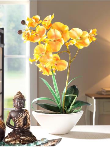 KLiNGEL Phalaenopsis in Gelb