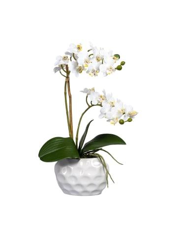 Creativ green Deko-Orchidee Phalaenopsis in weiß