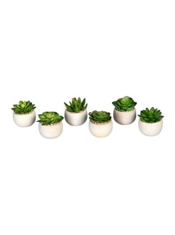Creativ green Deko-Sukkulente Echeveria 6er Set in grün