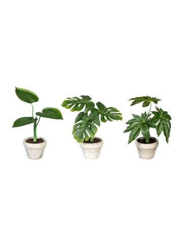 Creativ green Deko-Pflanze Splitphilo, Papaya und Aralie 3er Set in grün