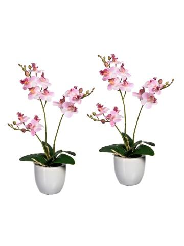 Creativ green Deko-Orchidee Phalaenopsis in rosa