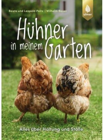 Ulmer Hühner in meinem Garten