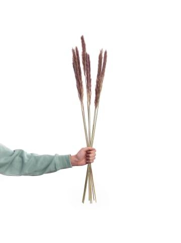 Butlers Trockenblumen Pampasgras Länge 70cm FLOWER MARKET in braun